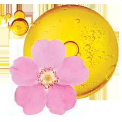 aceite de rosa muscat ingrediente orgánico