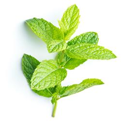 hydrolat de menthe bio